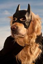Asistenční psi: superhrdinové všedního dne