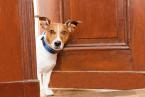 Granule pre psov je potrebné prispôsobiť plemenu, veku a fyzickej aktivite domáceho miláčika