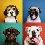 8 vecí, na ktoré sa pri starostlivosti o psíkov zabúda