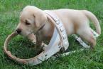 (NE)obyčajný život psíka v postroji