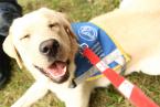 Pomôžte vodiacim psom počas Vianočnej charitatívnej zbierky!