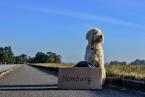 Cestovanie so psom do zahraničia - tipy na bezproblémovú dovolenku