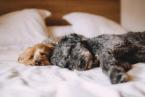 Dovolenka so psom na Slovensku: Do týchto čarovných hotelov môže aj váš miláčik