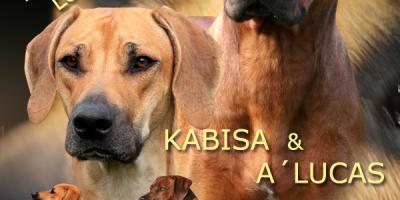 ,Rhodesian Ridgeback-zadáme šteniatka sPP