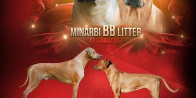 ,Minarbi BB litter
