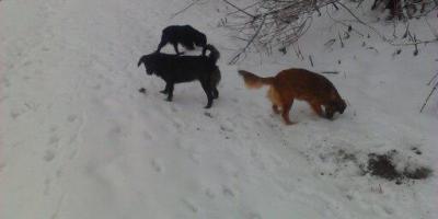 ,venčenie psíkov