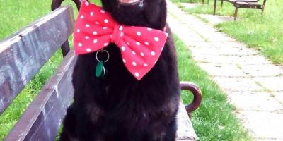 ,Som psík Bruno a chcem žiť!  S vami, nie v útulku.