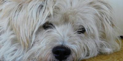 ,Súrne hľadám dobrých majiteľov pre psíka