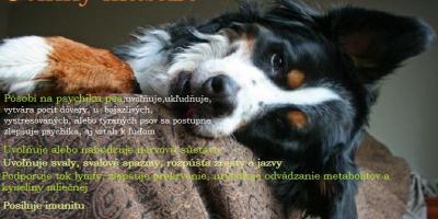,Rekondičná masáž psa a strečing