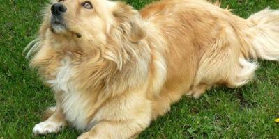 ,Darujem psíka z rodinných dovodov...