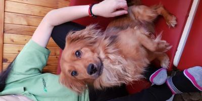 ,Darujem psa