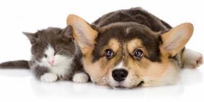 ,Ponúkam stráženie a venčenie zvierat