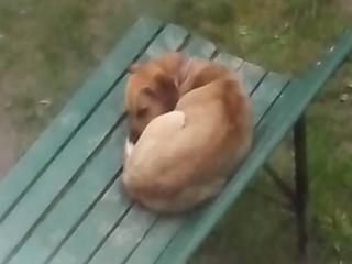 ,súrne hľadáme domov psíkovi