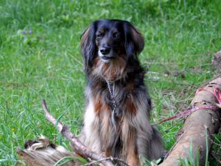 ,Stráženie, venčenie psov