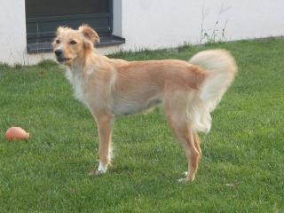,Darujeme psíka ktorý hľadá domov