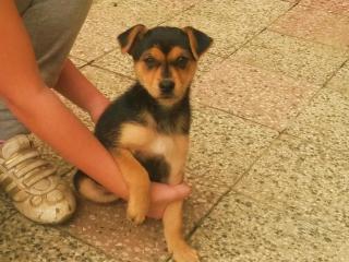 ,Rozkošné šteniatko kríženca