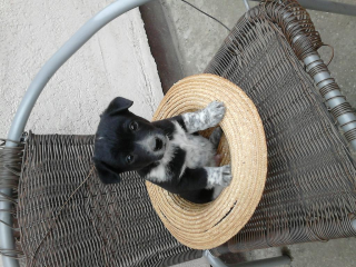 ,Darujem šteniatka