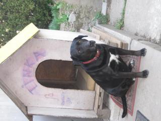 ,Darujem psa Tinu