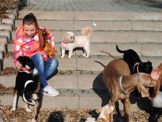 ,Seminár - Všetko čo vieme o psoch