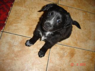 ,Darujem šteniatka, ktoré hľadajú nový domov.