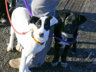 ,Bella a Bora hľadajú domov