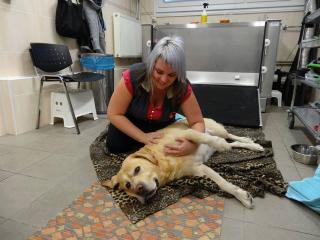, Kurz fyzioterapie a rehabilitácie pre malé zvieratá (mačka, pes...)