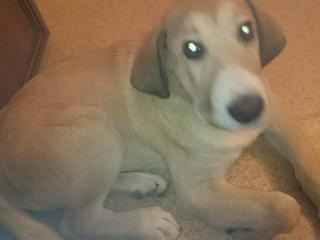,Darujem krásne 5 mesačné šteňa