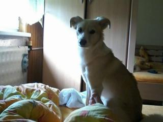 ,Darujem milého a poslusného psíka kríženca