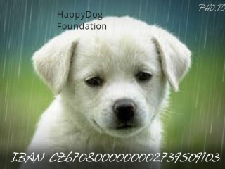 ,HappyDog