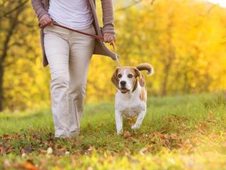 ,Starostlivosť o vášho psa
