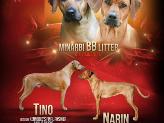 , Minarbi BB litter