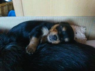 ,milé šteniatka