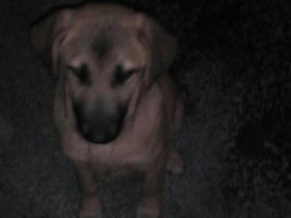 ,Vyhodený psík