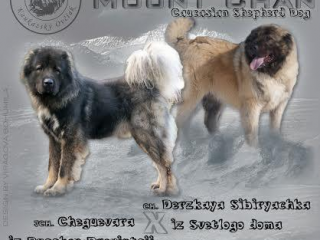 ,Kaukazský ovčiak