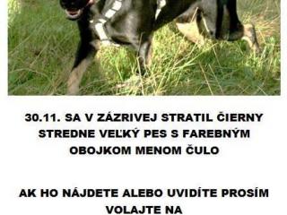 ,prosba o pomoc pri hladani strateneho psa