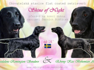 , Flat Coated Retriever s PP
