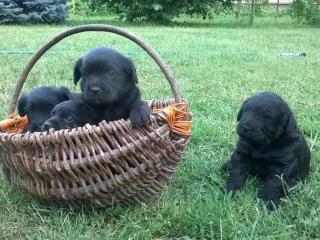,Darujem šteniatko