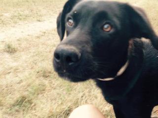 ,Darujem psa - Zorko hľadá majiteľa