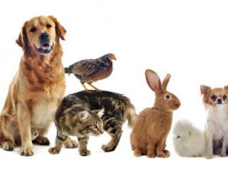 ,Stráženie zvierat
