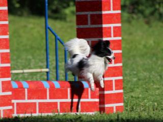 ,Ubytovanie a výcvik agility