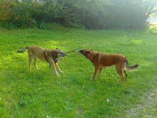 ,venčenie psov