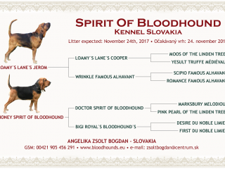 ,bloodhound steniatka