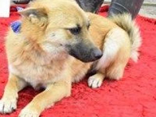 ,ZDENKO milučký rodinný psíček nemecký ovčiak