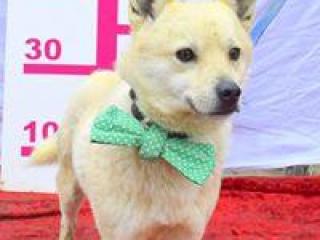 ,MÁRIO rodinný psíček kríženec