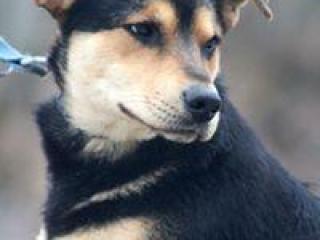 ,PIŠTA priateľský rodinný psík kríženec