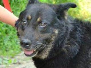 ,HENDRY dobrosrdečný a láskavý psík kríženec vlčiak