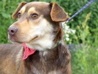 ,CHIPP dobrý vychovaný rodinný psík kríženec
