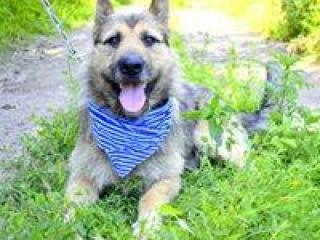 ,Fridolino prekrásny rodinný psík vlčiak