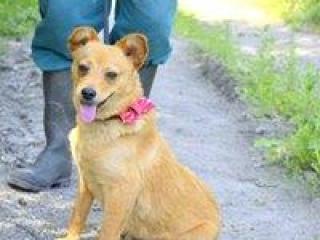 ,Najdušik milučký rodinný psíček kríženec čivava