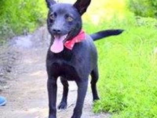 ,Blanko akurátny čierny psík kríženec